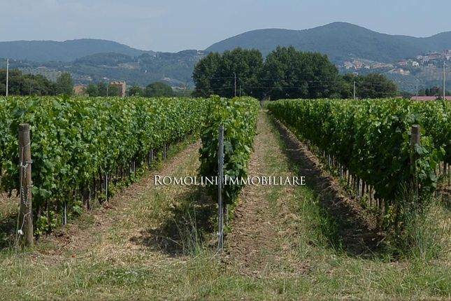 Farm for sale in Bolgheri, Tuscany, Italy