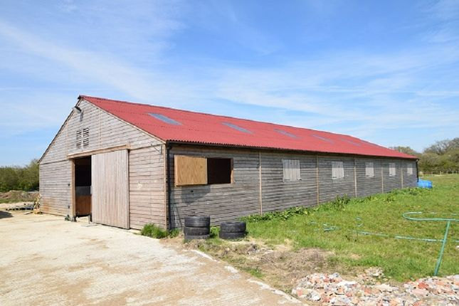 Thumbnail Equestrian property to rent in Braydon, Wiltshire