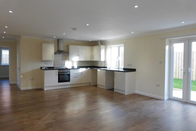 Thumbnail Bungalow to rent in Lower Polsham Road, Paignton