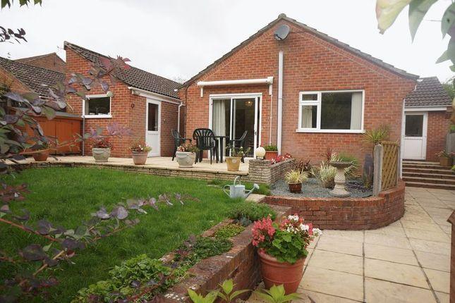 Thumbnail Bungalow to rent in Salisbury Close, Alton