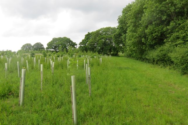 Thumbnail Land for sale in Stane Street, Five Oaks, West Sussex