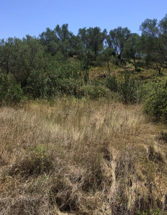 Land for sale in Lefkimmi, Corfu, Ionian Islands, Greece