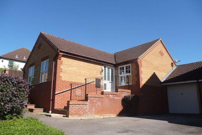 Thumbnail Bungalow to rent in Campanula Close, Abington, Northampton