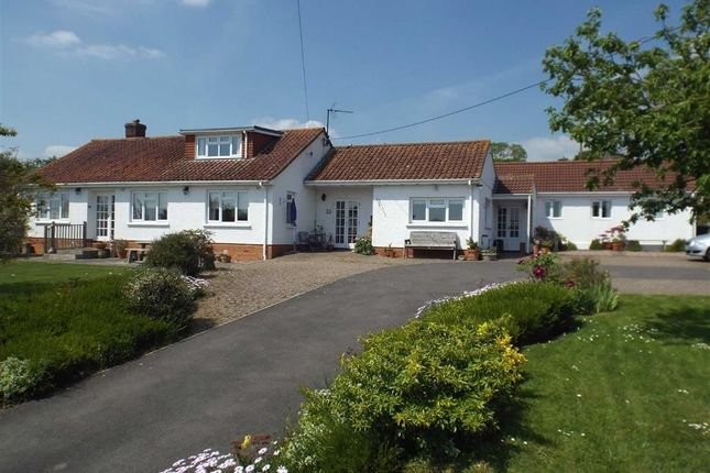 Thumbnail Property for sale in Taunton Road, Pedwell, Bridgwater