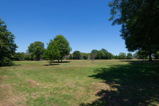 Field At The Rear