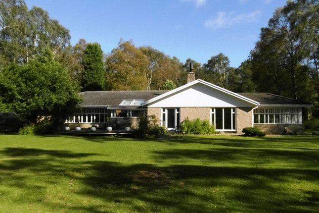 Thumbnail Bungalow to rent in Tranwell Woods, Morpeth