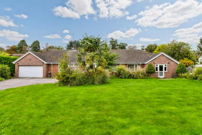 Thumbnail Detached bungalow for sale in Church Street, Exning, Newmarket, Suffolk