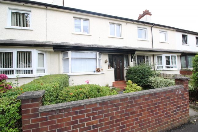Thumbnail Terraced house to rent in Ulsterville Avenue, Belfast