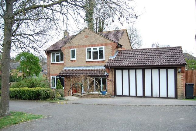 Thumbnail Detached house to rent in Old Roar Road, St Leonards-On-Sea, East Sussex