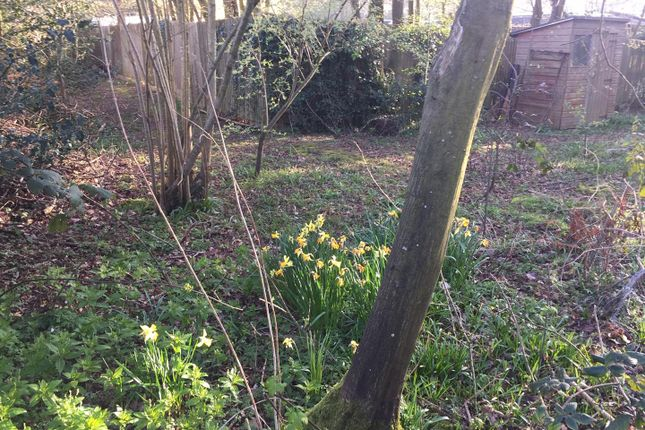 Woodland of Hempstead Lane, Hailsham BN27