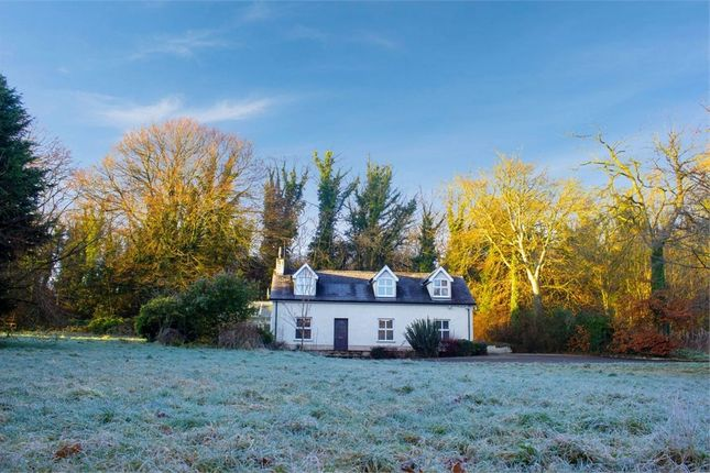 Thumbnail Detached house for sale in Curragh Road, Coleraine, County Londonderry