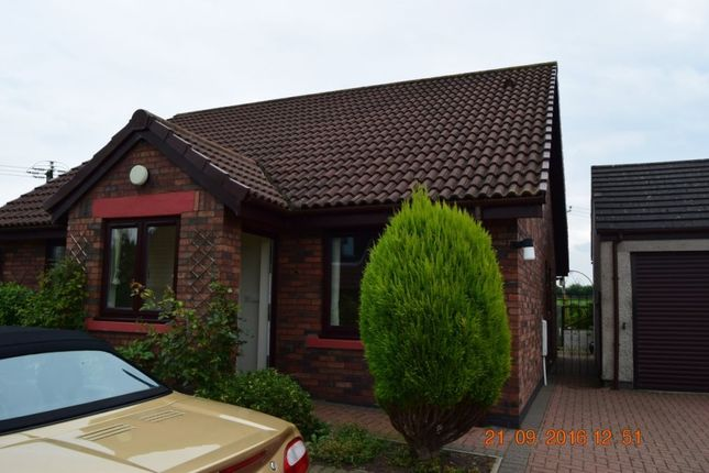 Thumbnail Bungalow to rent in Dale View, Laversdale, Irthington, Carlisle