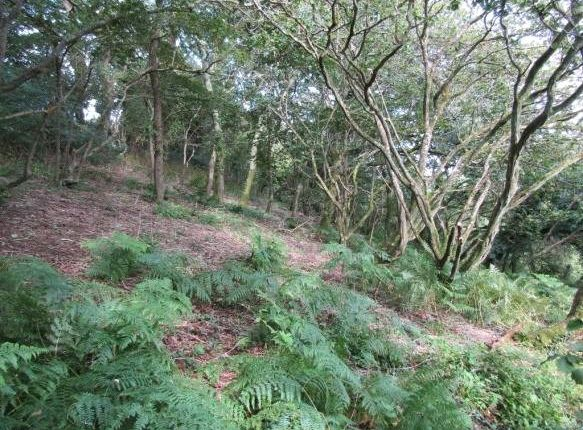 Picture No. 8 of Adjoining Governs Wood, Tregavethan, Truro, Cornwall TR4
