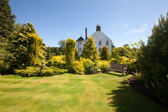 Gold Garden of Gallery, By Montrose, Angus DD10