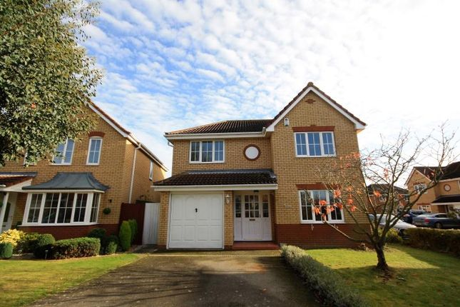 Thumbnail Detached house to rent in Cherry Blossom, Ipswich, Suffolk