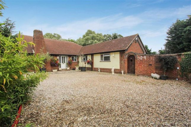 Thumbnail Detached bungalow for sale in Latchingdon Road, Cold Norton, Essex