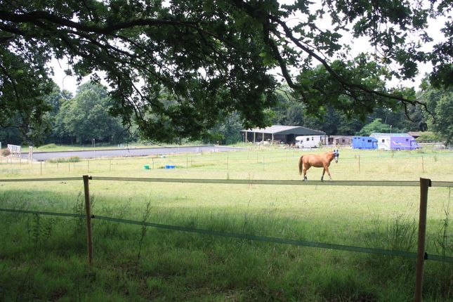 Thumbnail Equestrian property for sale in St Anns Hill, Chertsey