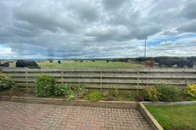 Photo 14 of Seggarsdean Farm, Haddington, East Lothian EH41