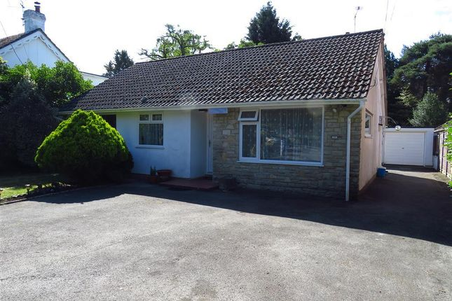 Thumbnail Bungalow to rent in Sandy Lane, St. Ives, Ringwood