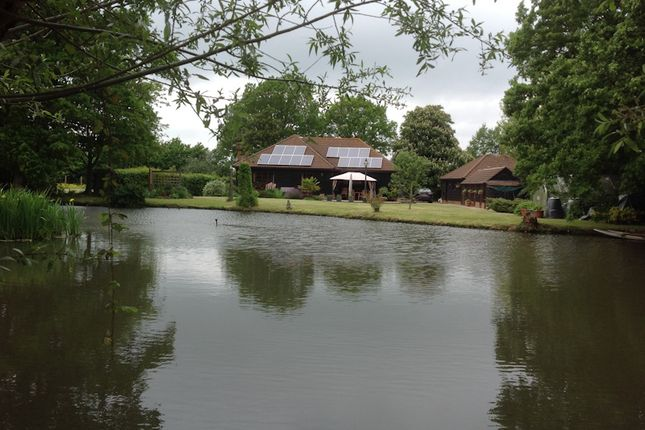 Rear Pond of Bethersden, Ashford TN26