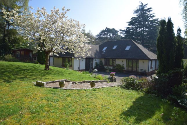 Thumbnail Bungalow to rent in Lindsay Road, Branksome Park, Poole