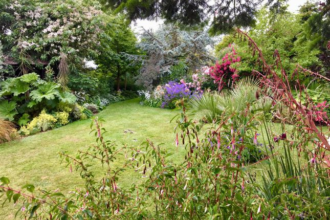 Rear Garden, 54 Hollym Road (2)