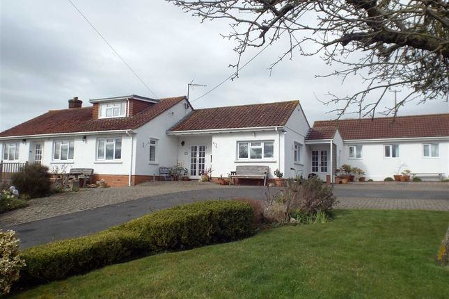 Thumbnail Property for sale in Taunton Road, Pedwell, Bridgwater, Somerset