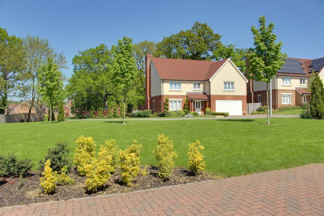 Thumbnail Detached house to rent in Columba Gardens, Wokingham