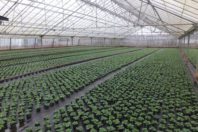Thumbnail Land for sale in Kingsway Nursery, Corston, Malmesbury, Wiltshire