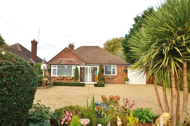 Thumbnail Detached bungalow for sale in West End, Woking, Surrey