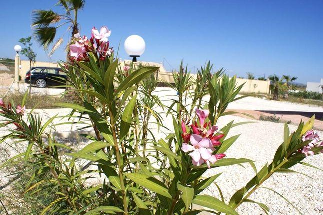 Image29 of Pinoso, Alicante, Spain