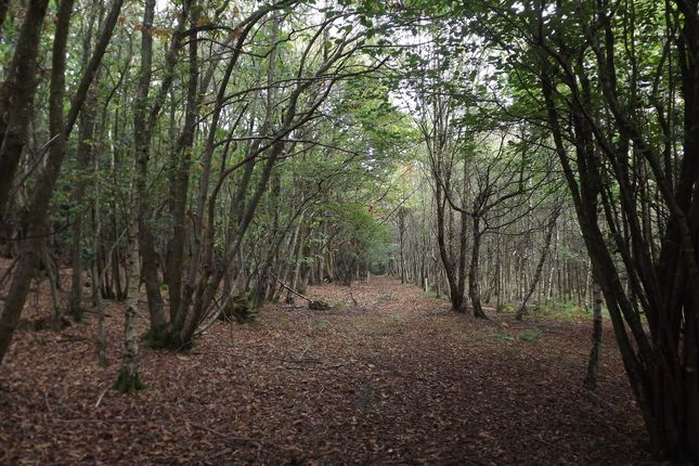 Thumbnail Land for sale in About 25 Acres Of Woodland, Burnt Oak Road, High Hurstwood