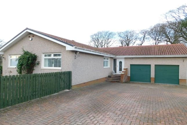 Thumbnail Bungalow to rent in Kersewell Avenue, Carnwath, Lanark