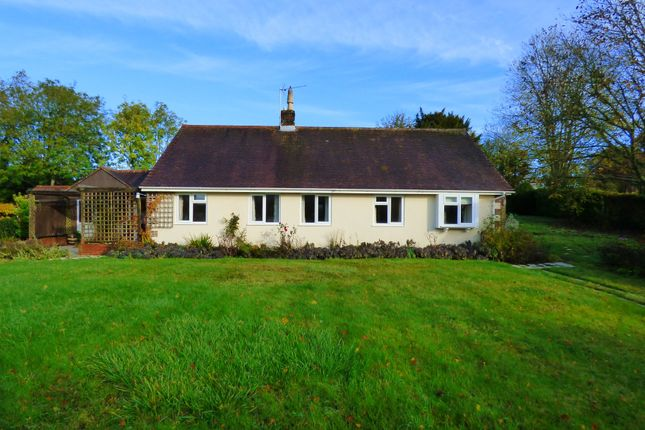Thumbnail Detached bungalow to rent in Iwerne Minster, Blandford Forum