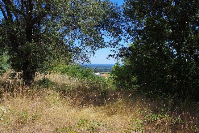 Property for sale in Languedoc-Roussillon, Pyrénées-Orientales, Les Albères