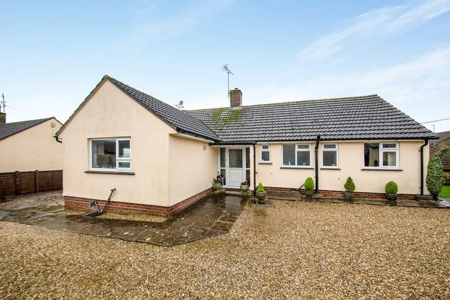 Thumbnail Detached bungalow for sale in Greylands, Cattistock, Dorchester
