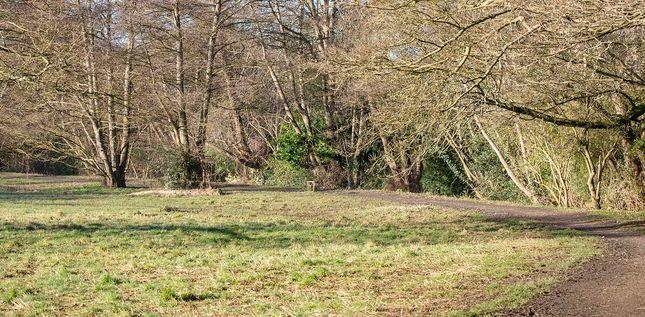 Image Of Birchen Oak