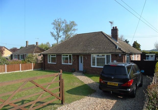 Thumbnail Detached bungalow for sale in Folly Road, Mildenhall, Bury St. Edmunds