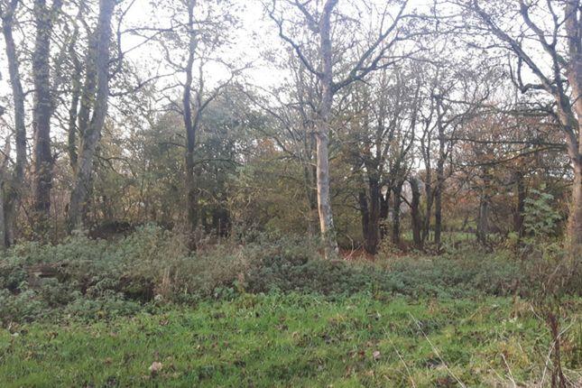 Land for sale in Calder, Halkirk