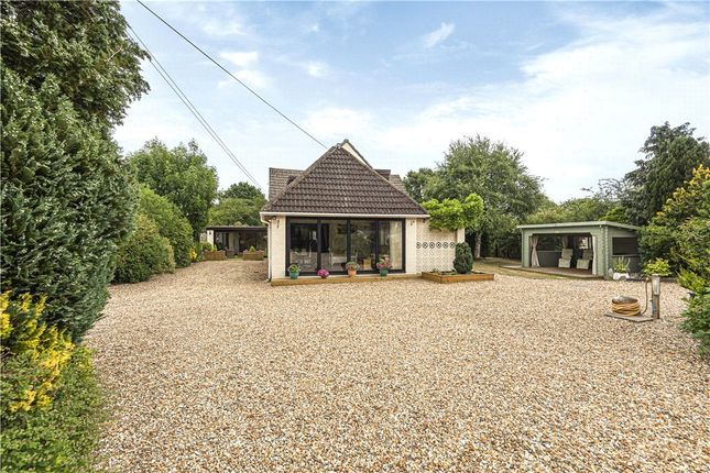 Thumbnail Detached bungalow to rent in Ringwood Road, St. Leonards, Ringwood