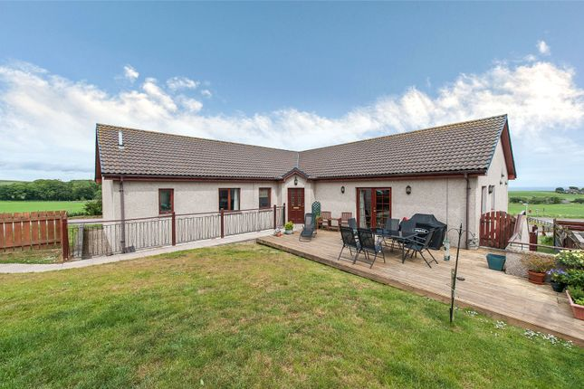 Thumbnail Bungalow for sale in Highview, Kinneff, Montrose, Angus