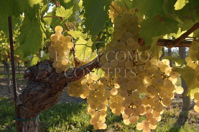 Thumbnail Land for sale in Vineyard, Friuli-Venezia Giulia, Italy