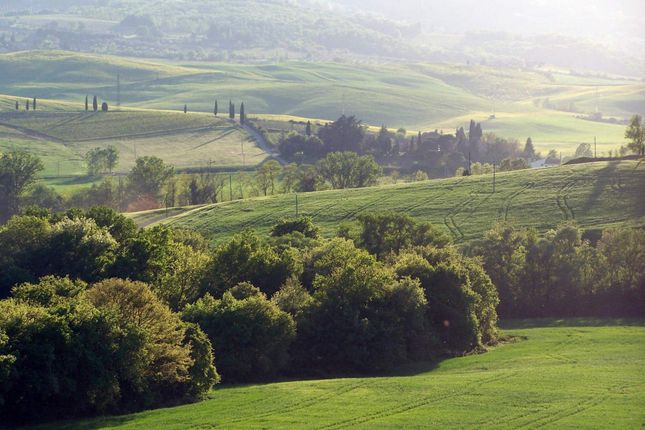 Town house for sale in Montalcino, Montalcino, Italy