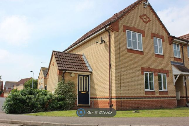 Thumbnail Semi-detached house to rent in Redwing Close, Peterborough