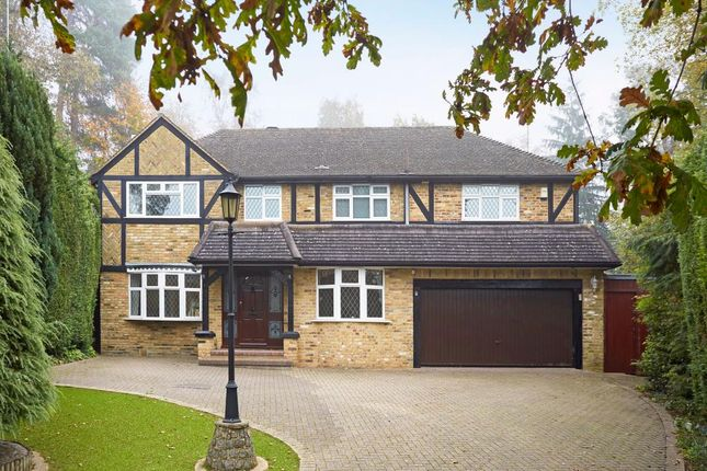 Thumbnail Detached house to rent in Murray Court, Ascot