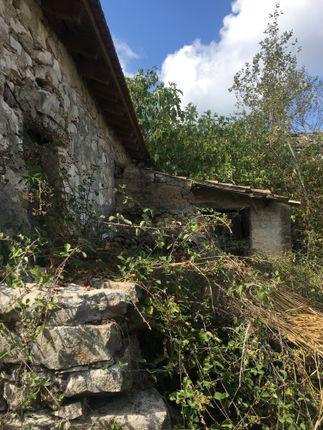 Ruin 5 Back Garden.