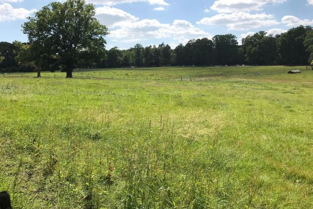 Thumbnail Equestrian property for sale in Parcel 4, Bartley Forest Farm, Lyndhurst Road, Cadnam, Southampton, Hampshire