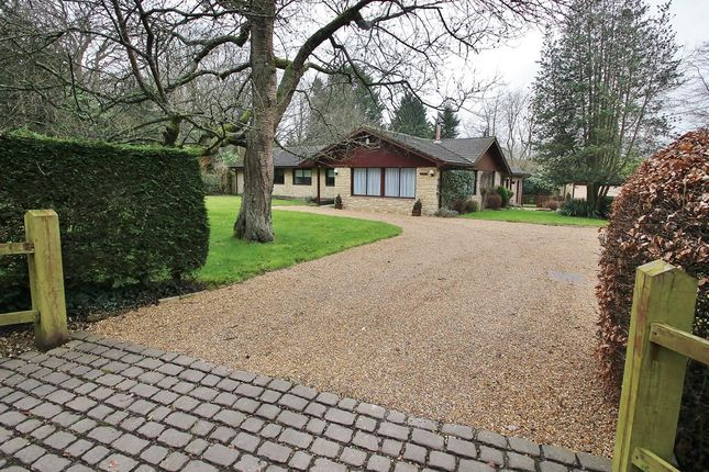 Thumbnail Detached bungalow for sale in Bethesda Street, Upper Basildon, Reading