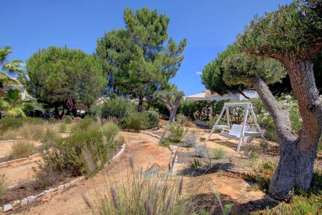 Olive Trees of Caramujeira, Algarve, Portugal