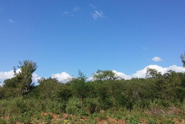 Land for sale in Hayes, Clarendon, Jamaica
